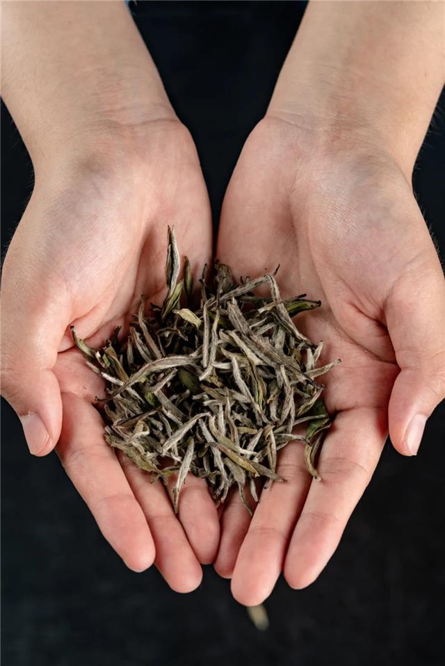白茶存放时间多久为好,白茶存放越久越好吗?