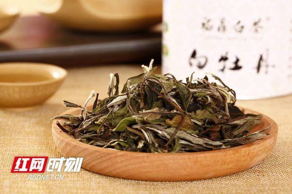 茶话二十四节气丨寒露上茶,眷恋一口白牡丹