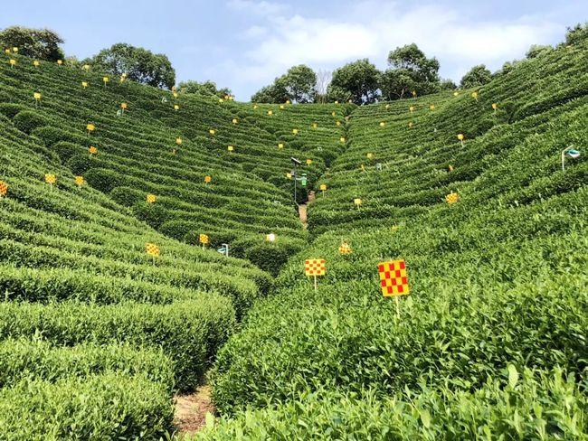 """率先践行""""三茶""""理念,中国茶高端市场发展新的方法论"""