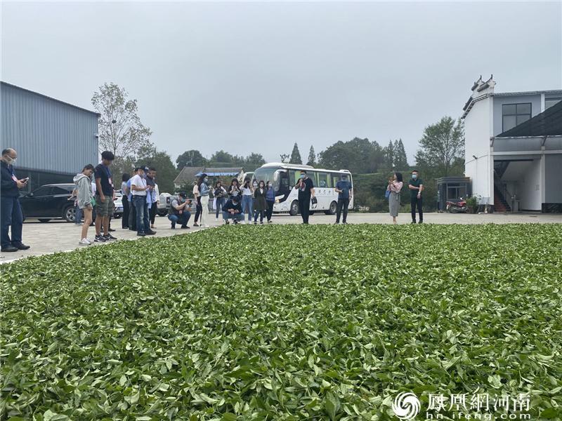 """两岸媒体走进信阳,共同关注""""茶旅融合""""的乡村振兴实践"""