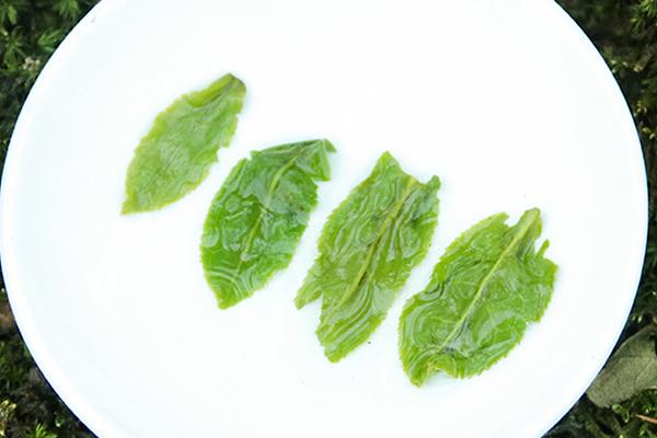 六安瓜片采摘标准(六安瓜片的制作工艺)