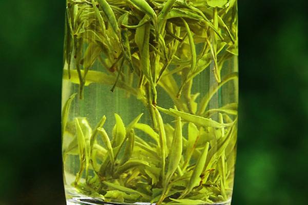 黄山毛峰属于什么茶(黄山毛峰的制作工序步骤介绍)