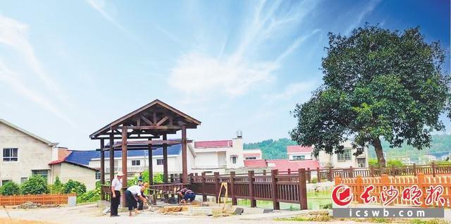 长沙县金井镇:从卖茶叶到卖风景,绿茶小镇一路风光