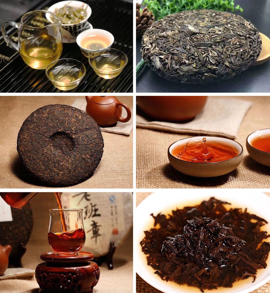 普洱生茶和普洱熟茶到底有什么区别?