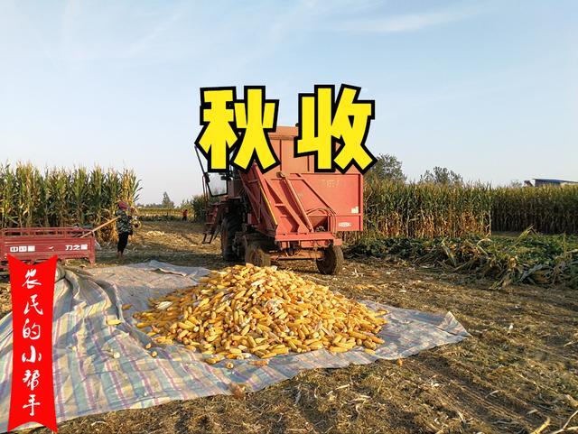 寒露节气农事有哪些?除了收玉米、种小麦,这些农事别错过了