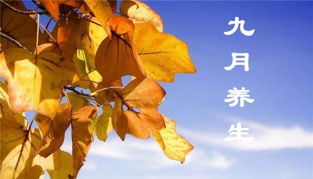 秋天的第一杯养生茶(九月养生,适合饮三杯茶,养生更健康)