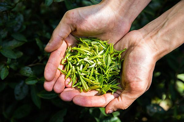 茶叶的功效与作用(常喝茶对身体有什么好处)